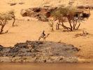 Asuan Nil