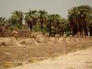 Luxor aleja Sfiksów