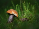 DSC_5731 p grzyb