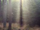 DSC_5741 p drzewa