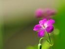 dsc_0097-kwiatek