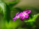 dsc_0099-kwiatek