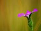 dsc_0120-kwiatek