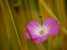 dsc_0125-kwiatek-biedronka