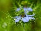 dsc_0161-kwiatek