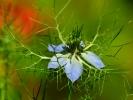 dsc_0166-kwiatek