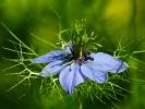 dsc_0169-kwiatek