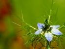 dsc_0174-kwiatek
