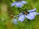dsc_0176-kwiatek