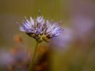 dsc_0201-kwiatek-fajny