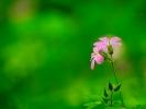 dsc_0225-kwiatek