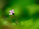 dsc_0257-kwiatek
