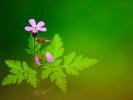 dsc_0259-kwiatek