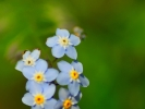 dsc_0301-kwiatek