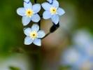 dsc_0305-kwiatek