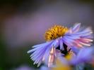 dsc_0361-kwiatek