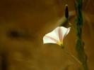dsc_0504-kwiatek