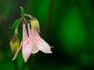 dsc_0635-kwiatek