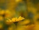 DSC_4374 p kwiatek