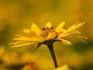 DSC_4379 p kwiatek