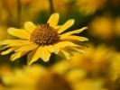 DSC_4387 p kwiatek