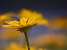 DSC_4392 p kwiatek