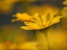 DSC_4399 p kwiatek
