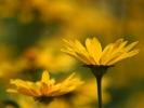 DSC_4400 p kwiatek