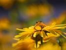 DSC_4402 p kwiatek
