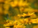 DSC_4405 p kwiatek