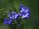 DSC_4454 p kwiatek