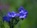 DSC_4455 p kwiatek