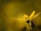 DSC_4558 p kwiatek