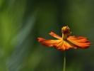 DSC_4570 p kwiatek