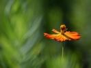 DSC_4572 p kwiatek