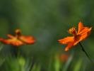 DSC_4574 p kwiatek