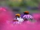 DSC_4581 p kwiatek