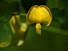 DSC_0018 kwiatek