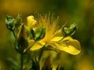 DSC_0033 kwiatek