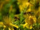 DSC_0034 kwiatek