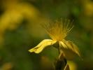 DSC_0040 kwiatek
