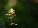 DSC_0060 kwiatek