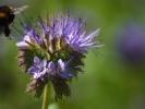 DSC_9964 kwiatek