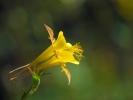 DSC_9971 kwiatek