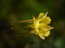 DSC_9991 kwiatek