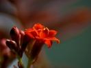 DSC_2583 p kwiatek