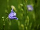 DSC_2941 kwiatek