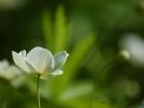 DSC_2947 kwiatek