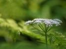 DSC_2963 kwiatek