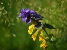 DSC_2965 kwiatek